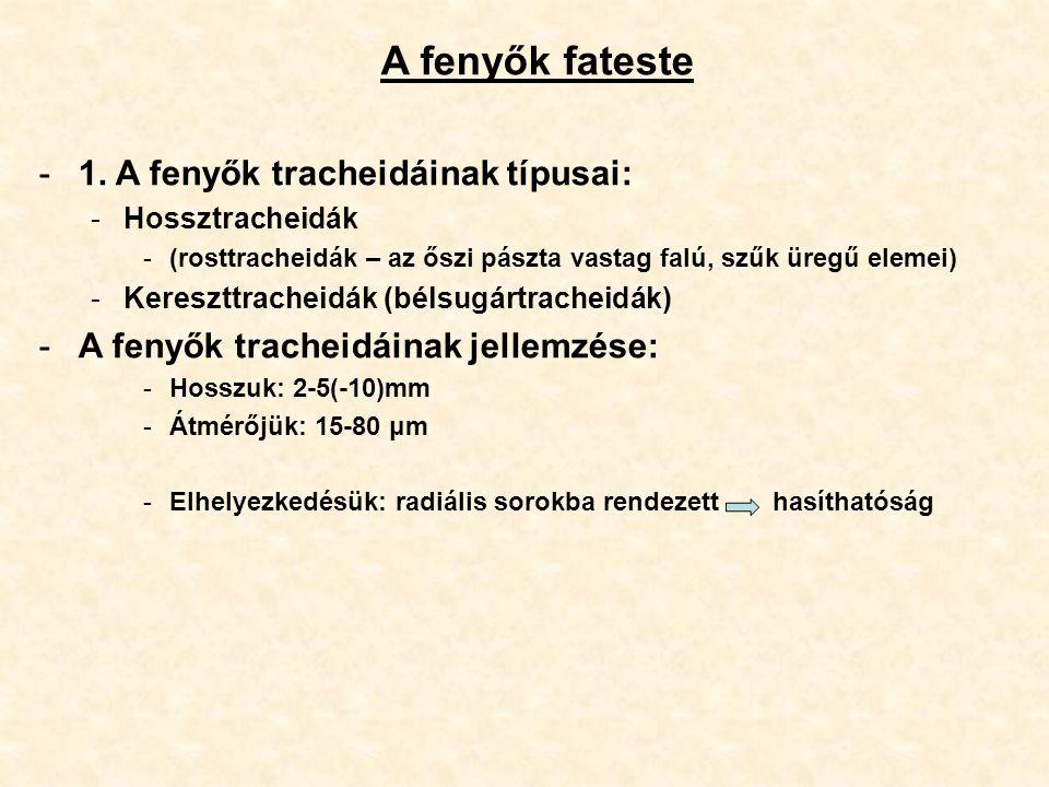 A fenyők fateste -1. A fenyők tracheidáinak típusai: -Hossztracheidák -(rosttracheidák – az őszi pászta vastag falú, szűk üregű elemei) -Kereszttrache
