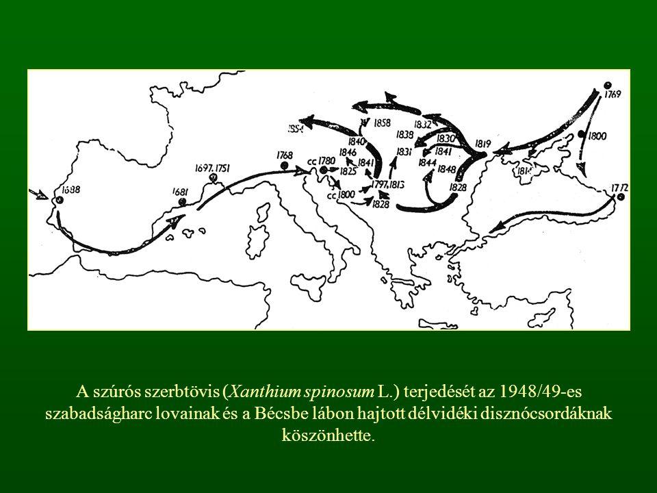 A szúrós szerbtövis (Xanthium spinosum L.) terjedését az 1948/49-es szabadságharc lovainak és a Bécsbe lábon hajtott délvidéki disznócsordáknak köszön