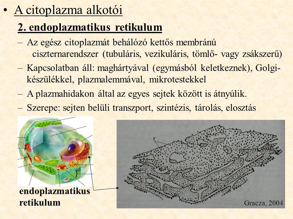 endoplazmatikus retikulum A citoplazma alkotói 2. endoplazmatikus retikulum –Az egész citoplazmát behálózó kettős membránú ciszternarendszer (tubulári