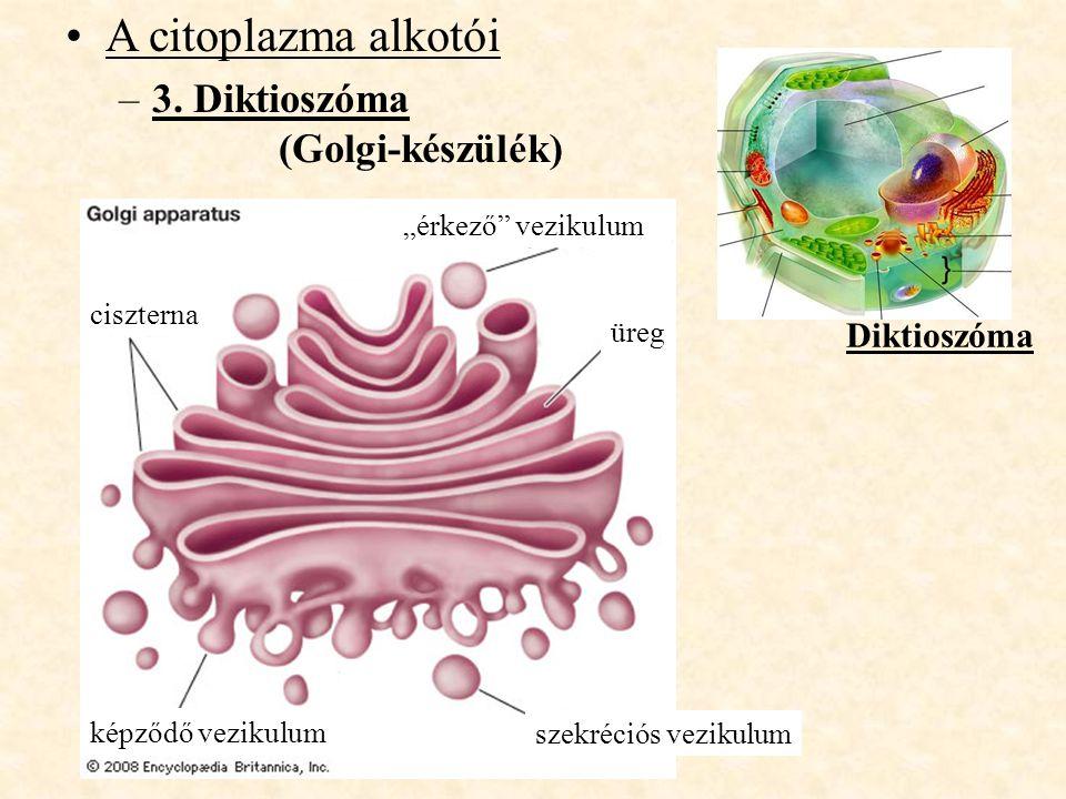 """A citoplazma alkotói –3. Diktioszóma (Golgi-készülék) Diktioszóma ciszterna képződő vezikulum szekréciós vezikulum """"érkező"""" vezikulum üreg"""