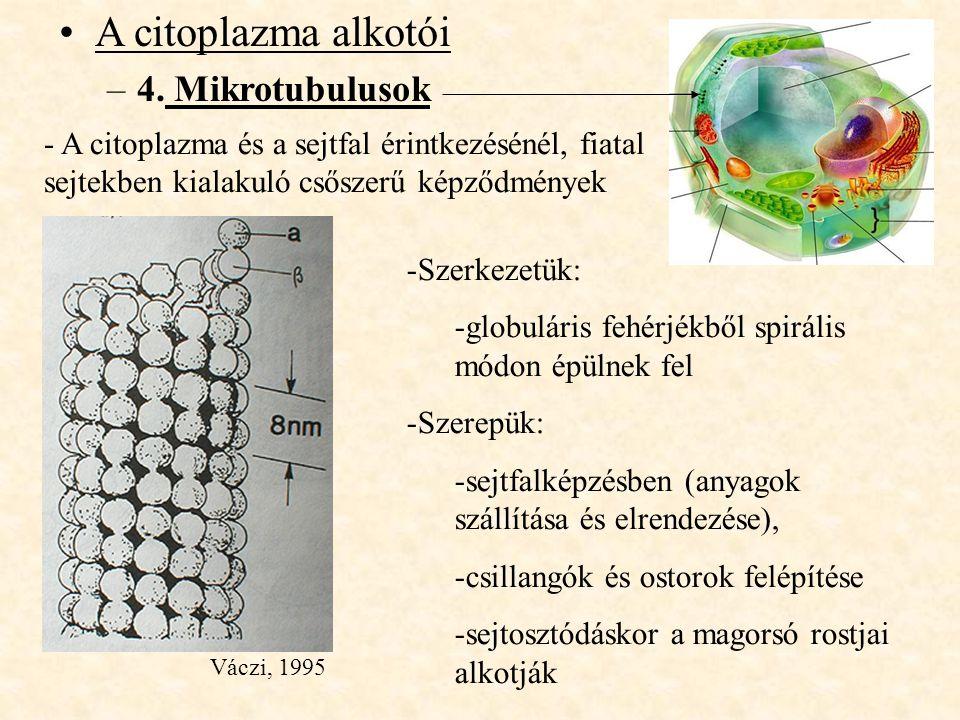 A citoplazma alkotói –4. Mikrotubulusok -Szerkezetük: -globuláris fehérjékből spirális módon épülnek fel -Szerepük: -sejtfalképzésben (anyagok szállít