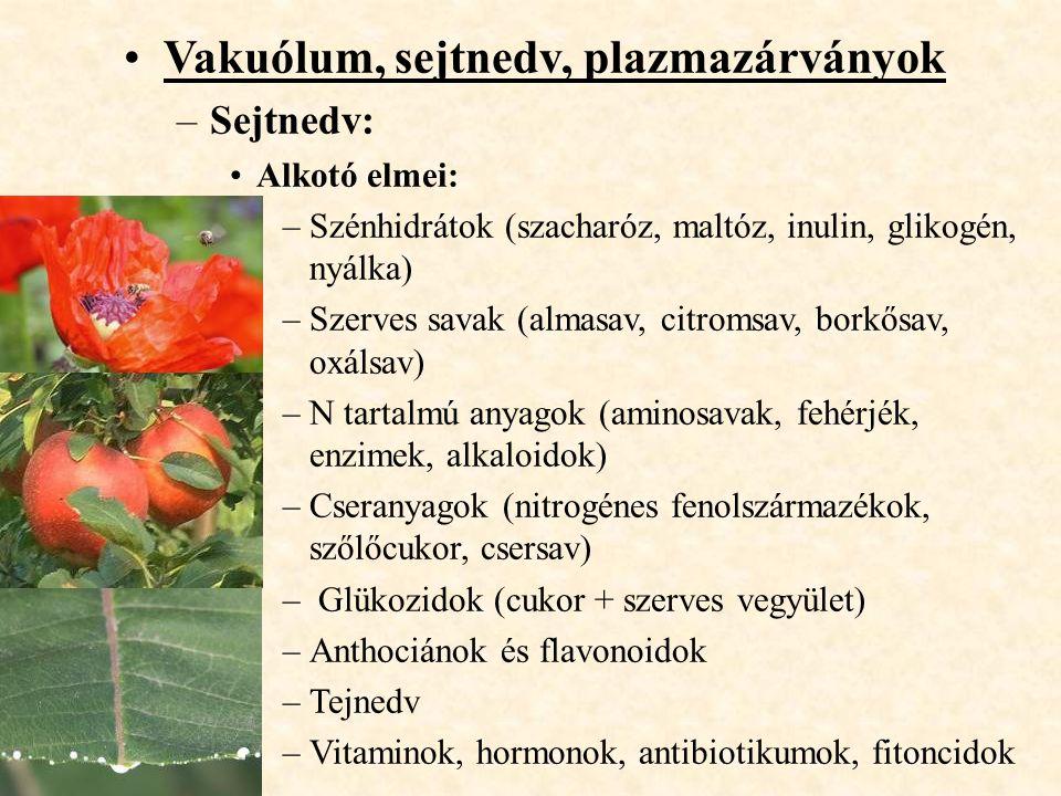 Vakuólum, sejtnedv, plazmazárványok –Sejtnedv: Alkotó elmei: –Szénhidrátok (szacharóz, maltóz, inulin, glikogén, nyálka) –Szerves savak (almasav, citr