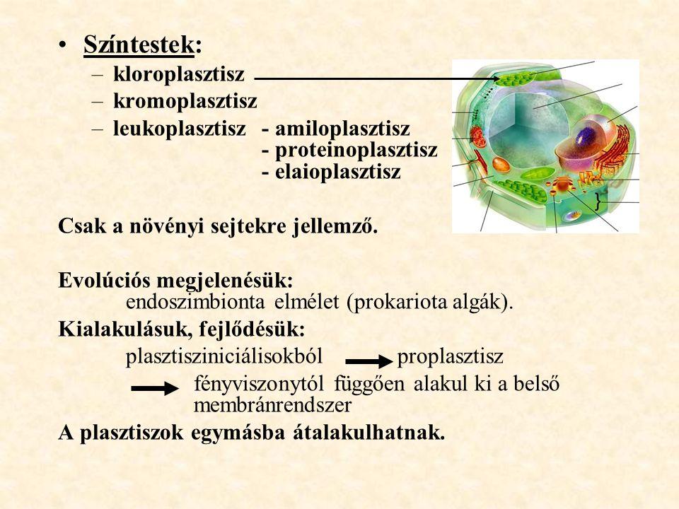 Színtestek: –kloroplasztisz –kromoplasztisz –leukoplasztisz - amiloplasztisz - proteinoplasztisz - elaioplasztisz Csak a növényi sejtekre jellemző. Ev