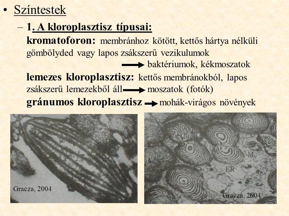 Színtestek –1. A kloroplasztisz típusai: kromatoforon: membránhoz kötött, kettős hártya nélküli gömbölyded vagy lapos zsákszerű vezikulumok baktériumo