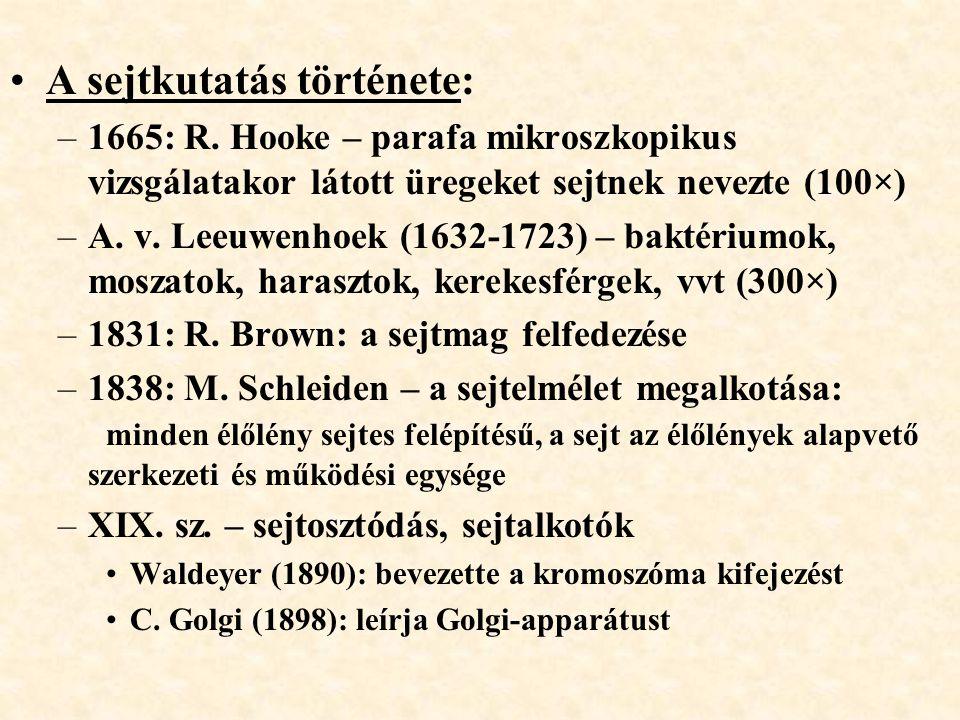 A sejtkutatás története: –1665: R. Hooke – parafa mikroszkopikus vizsgálatakor látott üregeket sejtnek nevezte (100×) –A. v. Leeuwenhoek (1632-1723) –