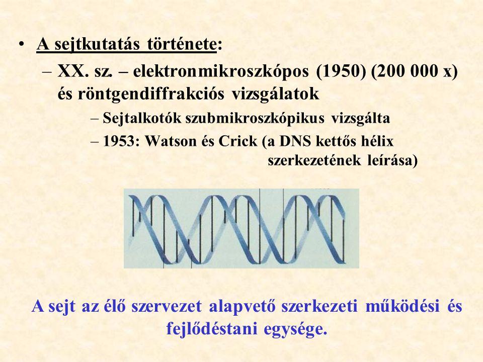 A sejtkutatás története: –XX. sz. – elektronmikroszkópos (1950) (200 000 x) és röntgendiffrakciós vizsgálatok –Sejtalkotók szubmikroszkópikus vizsgált