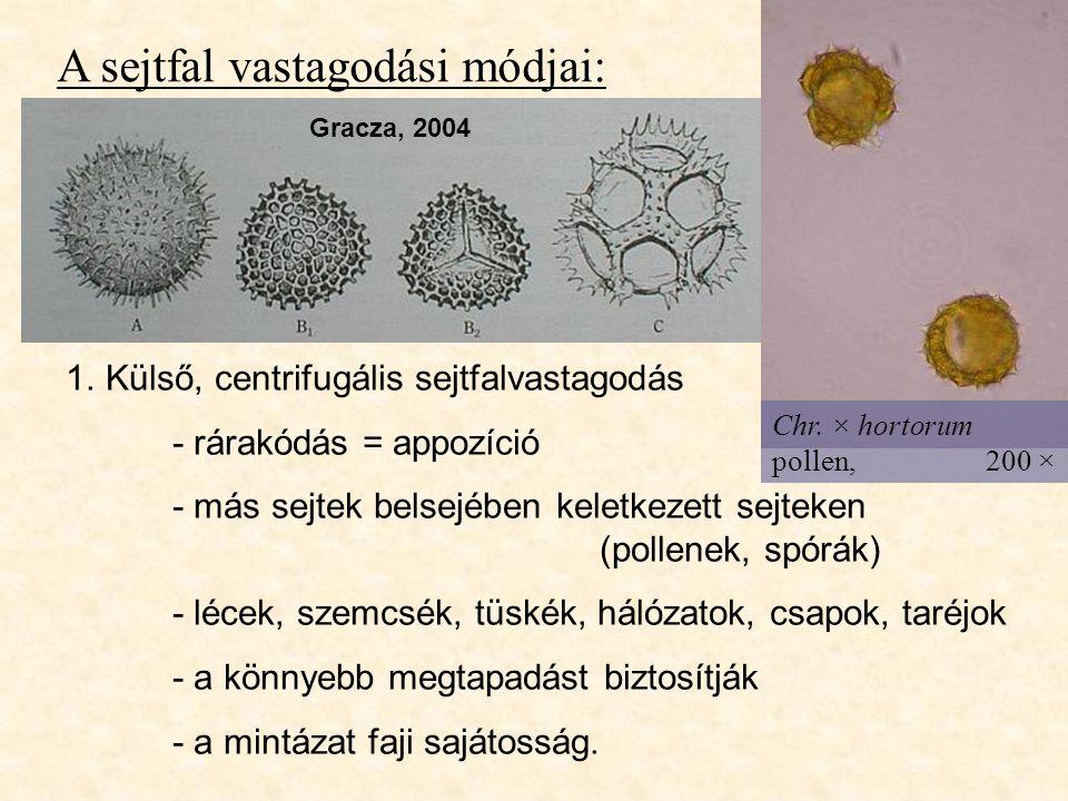 A sejtfal vastagodási módjai: 1.Külső, centrifugális sejtfalvastagodás - rárakódás = appozíció - más sejtek belsejében keletkezett sejteken (pollenek,