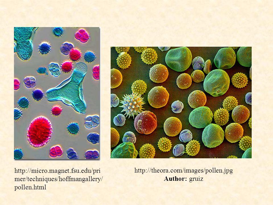 http://theora.com/images/pollen.jpg Author: gruiz http://micro.magnet.fsu.edu/pri mer/techniques/hoffmangallery/ pollen.html