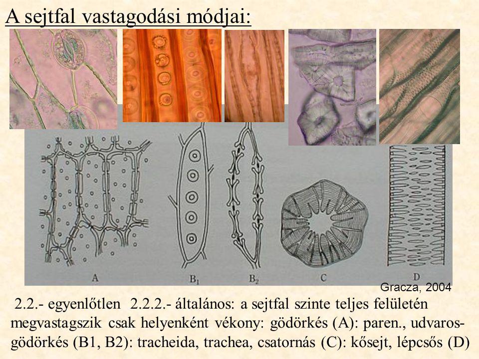 A sejtfal vastagodási módjai: 2.2.- egyenlőtlen 2.2.2.- általános: a sejtfal szinte teljes felületén megvastagszik csak helyenként vékony: gödörkés (A