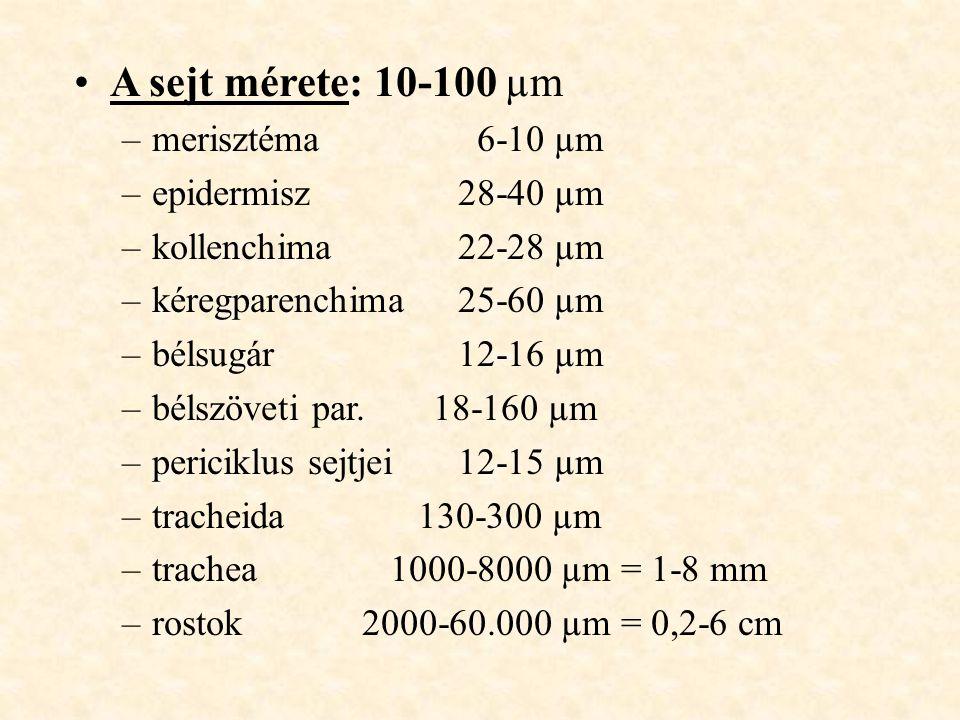 A sejt mérete: 10-100 µm –merisztéma 6-10 µm –epidermisz28-40 µm –kollenchima22-28 µm –kéregparenchima25-60 µm –bélsugár12-16 µm –bélszöveti par. 18-1