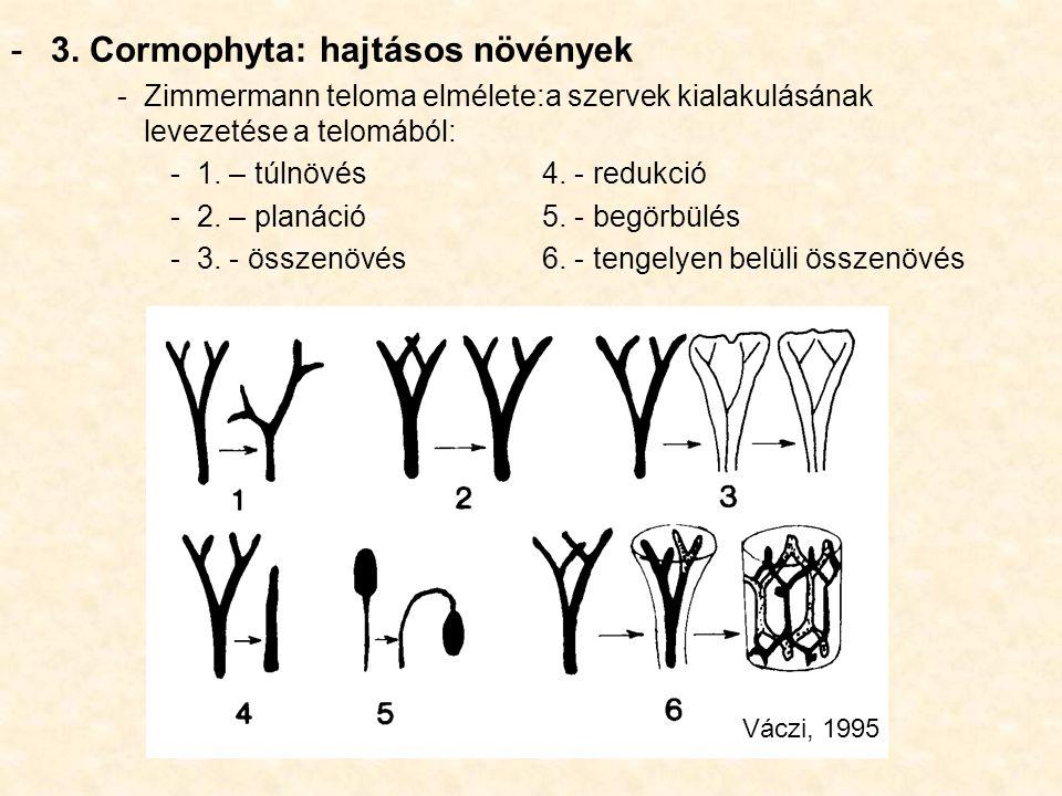 -3. Cormophyta: hajtásos növények -Zimmermann teloma elmélete:a szervek kialakulásának levezetése a telomából: -1. – túlnövés4. - redukció -2. – planá