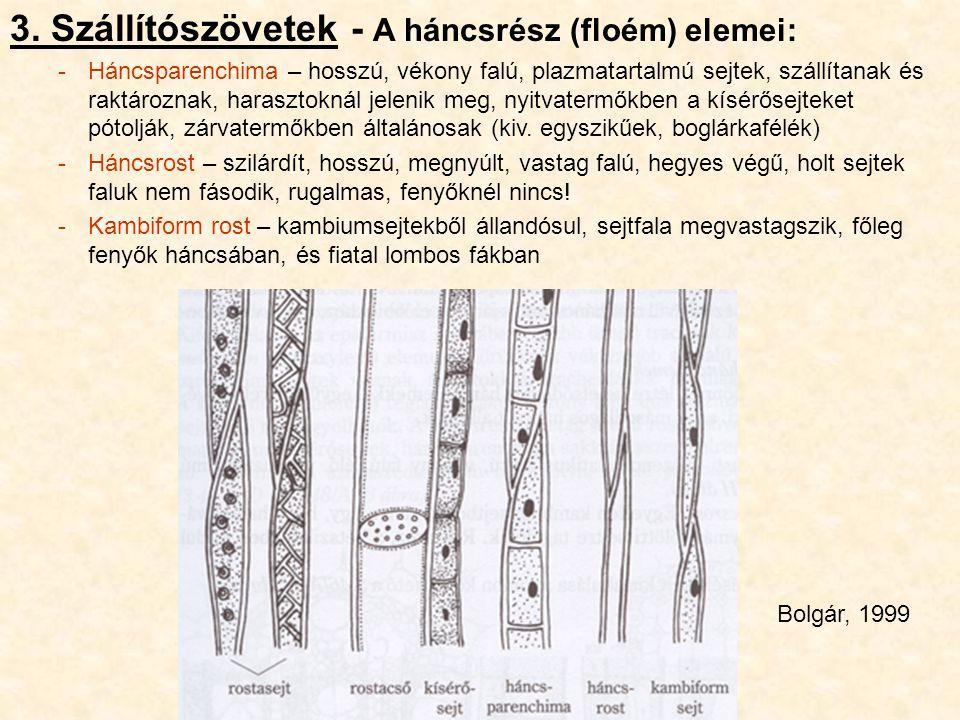 3. Szállítószövetek - A háncsrész (floém) elemei: -Háncsparenchima – hosszú, vékony falú, plazmatartalmú sejtek, szállítanak és raktároznak, harasztok