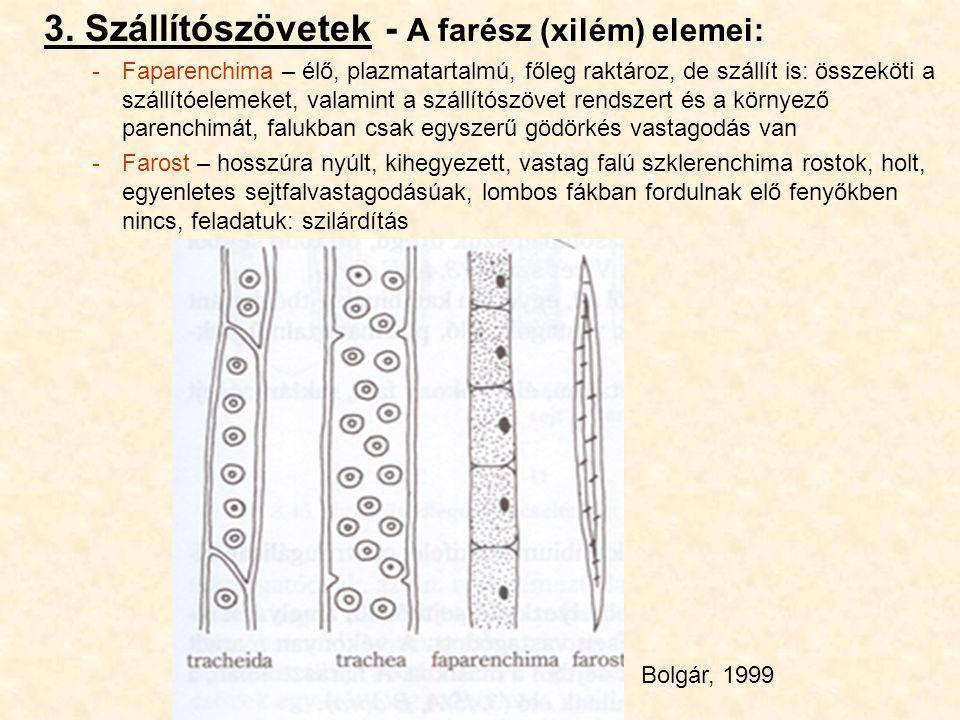 3. Szállítószövetek - A farész (xilém) elemei: -Faparenchima – élő, plazmatartalmú, főleg raktároz, de szállít is: összeköti a szállítóelemeket, valam