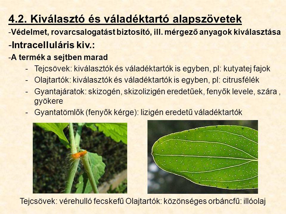 4.2. Kiválasztó és váladéktartó alapszövetek -Védelmet, rovarcsalogatást biztosító, ill. mérgező anyagok kiválasztása -Intracelluláris kiv.: -A termék