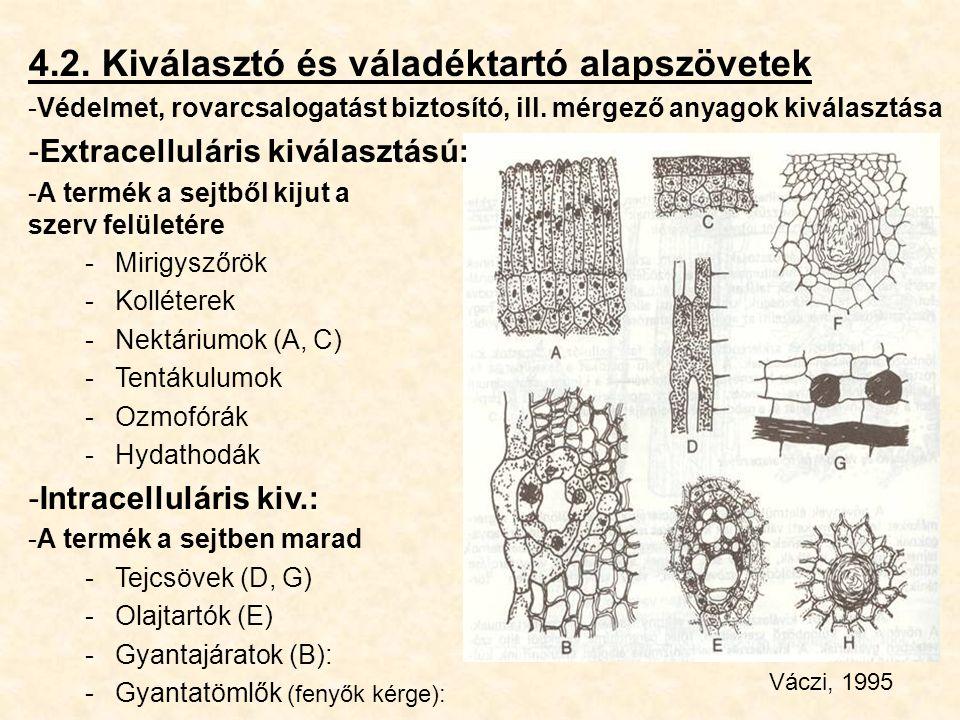 4.2. Kiválasztó és váladéktartó alapszövetek -Védelmet, rovarcsalogatást biztosító, ill. mérgező anyagok kiválasztása -Extracelluláris kiválasztású: -