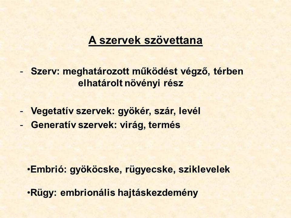 A szervek szövettana -Szerv: meghatározott működést végző, térben elhatárolt növényi rész -Vegetatív szervek: gyökér, szár, levél -Generatív szervek: