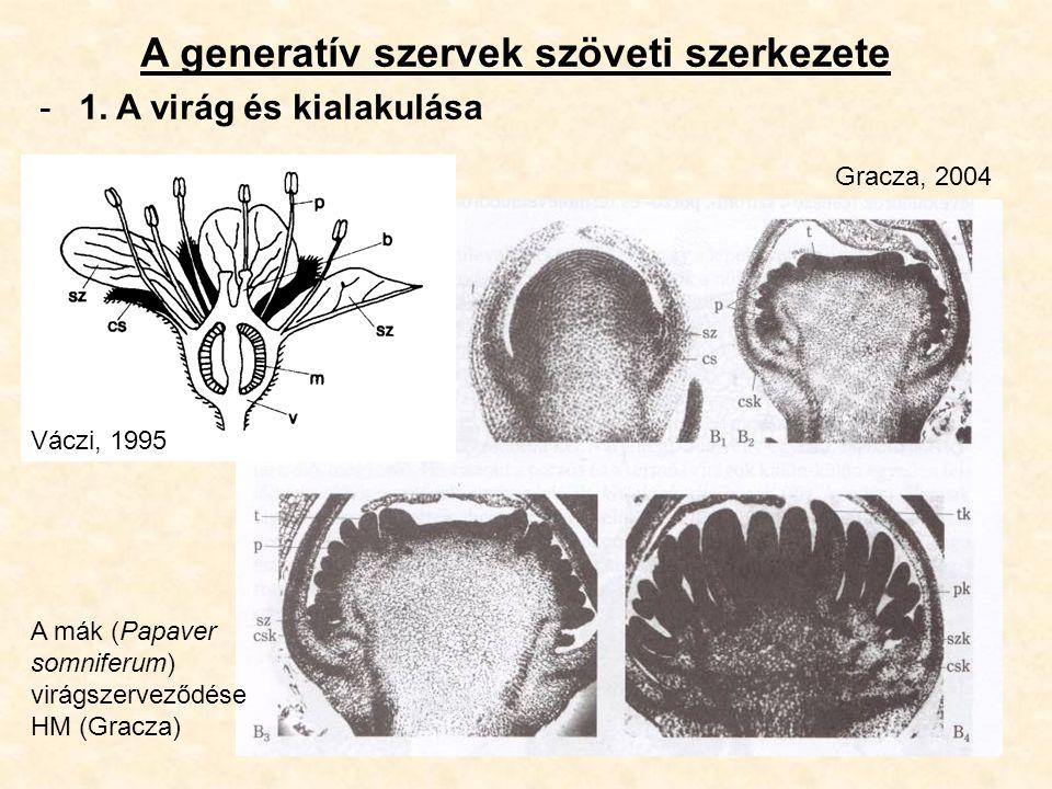 A generatív szervek szöveti szerkezete -1. A virág és kialakulása A mák (Papaver somniferum) virágszerveződése HM (Gracza) Gracza, 2004 Váczi, 1995
