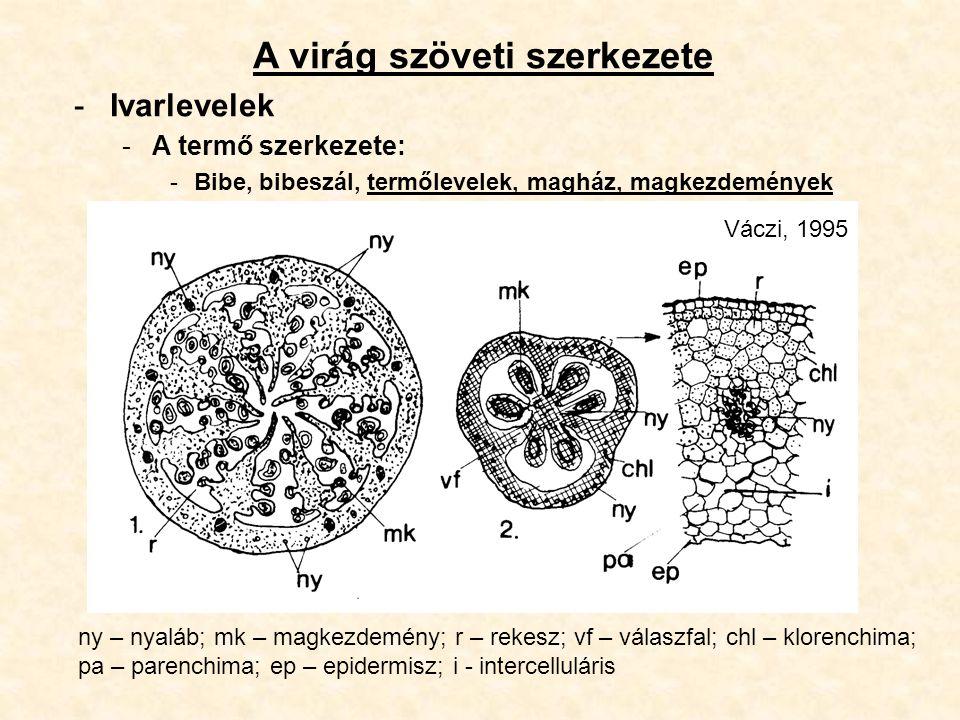 A virág szöveti szerkezete -Ivarlevelek -A termő szerkezete: -Bibe, bibeszál, termőlevelek, magház, magkezdemények ny – nyaláb; mk – magkezdemény; r –