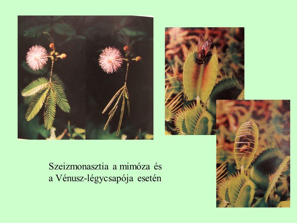 Szeizmonasztia a mimóza és a Vénusz-légycsapója esetén