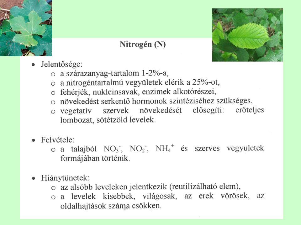 A növények ingerjelenségei Inger: A növényekre ható külső feltételek megváltozása.