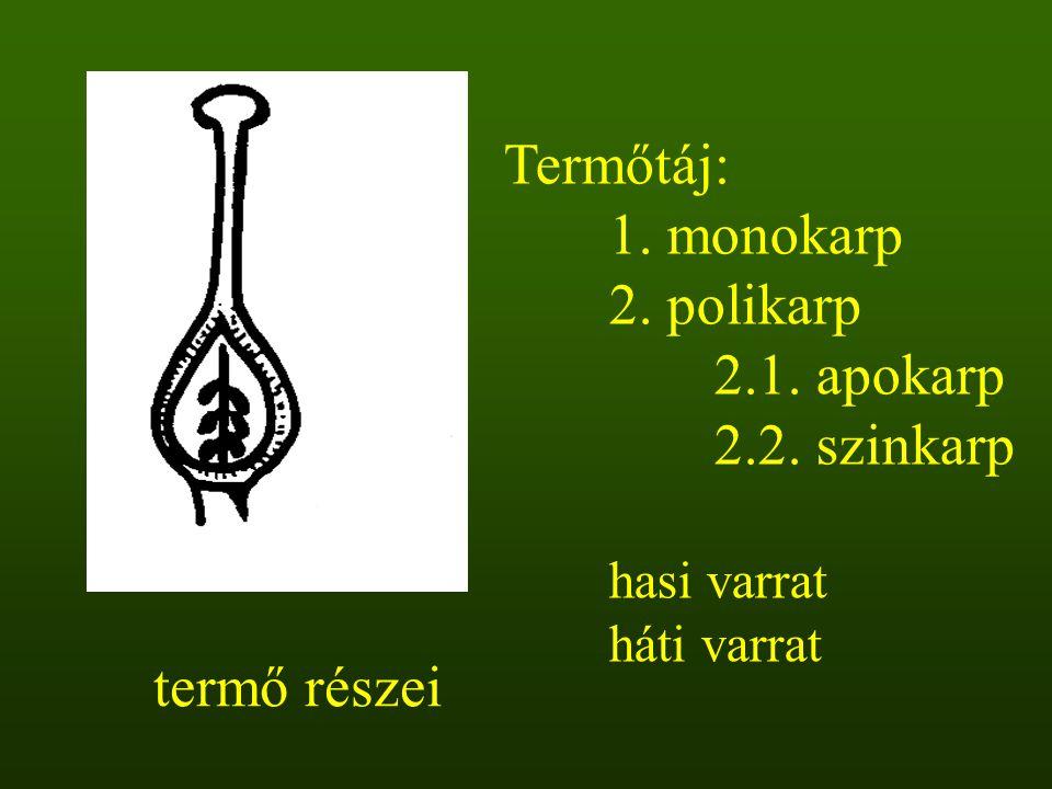 aszmag