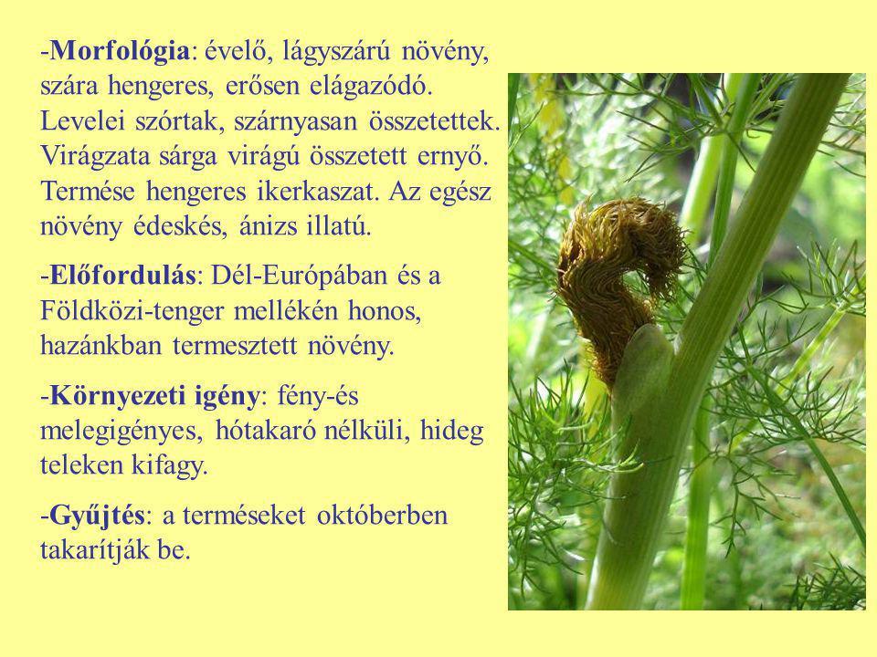 -Morfológia: évelő, lágyszárú növény, szára hengeres, erősen elágazódó. Levelei szórtak, szárnyasan összetettek. Virágzata sárga virágú összetett erny