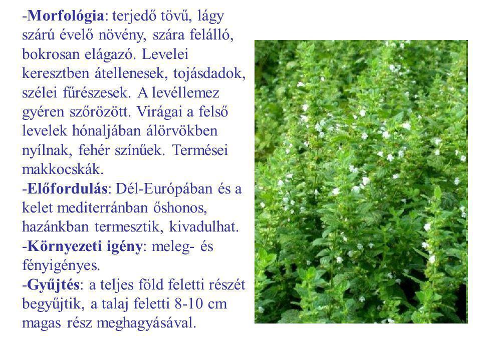 -Morfológia: terjedő tövű, lágy szárú évelő növény, szára felálló, bokrosan elágazó. Levelei keresztben átellenesek, tojásdadok, szélei fűrészesek. A