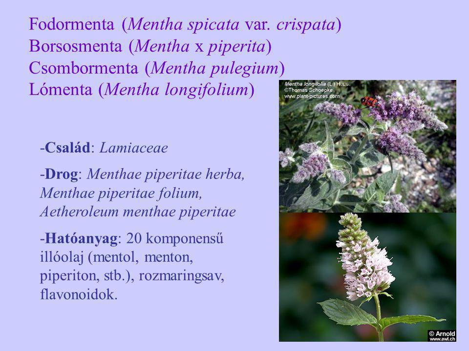 -Család: Lamiaceae -Drog: Menthae piperitae herba, Menthae piperitae folium, Aetheroleum menthae piperitae -Hatóanyag: 20 komponensű illóolaj (mentol,