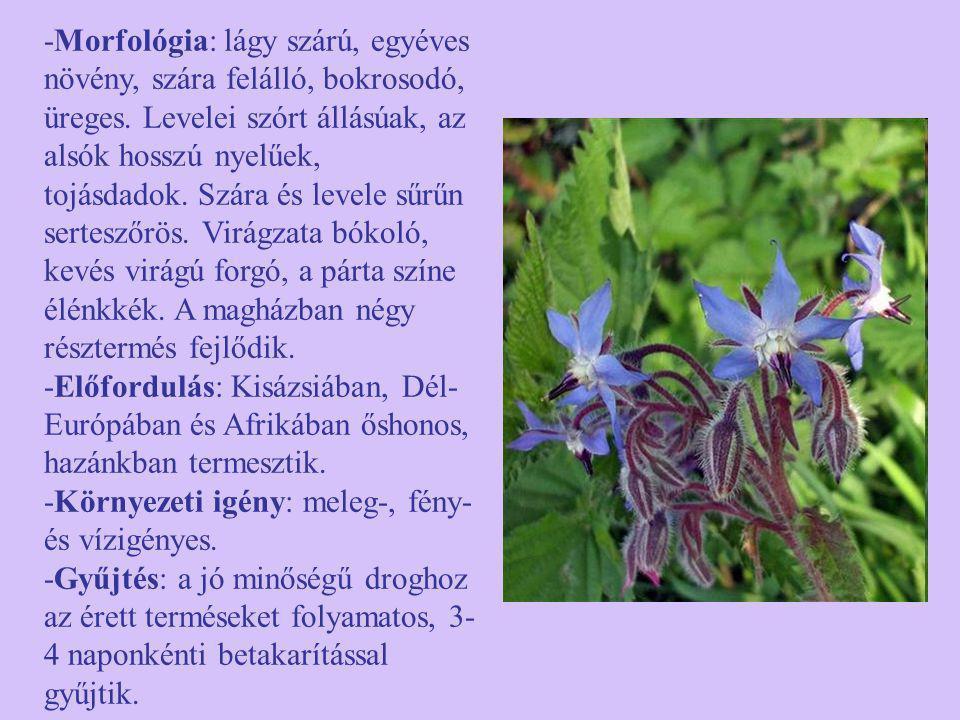-Morfológia: lágy szárú, egyéves növény, szára felálló, bokrosodó, üreges. Levelei szórt állásúak, az alsók hosszú nyelűek, tojásdadok. Szára és level