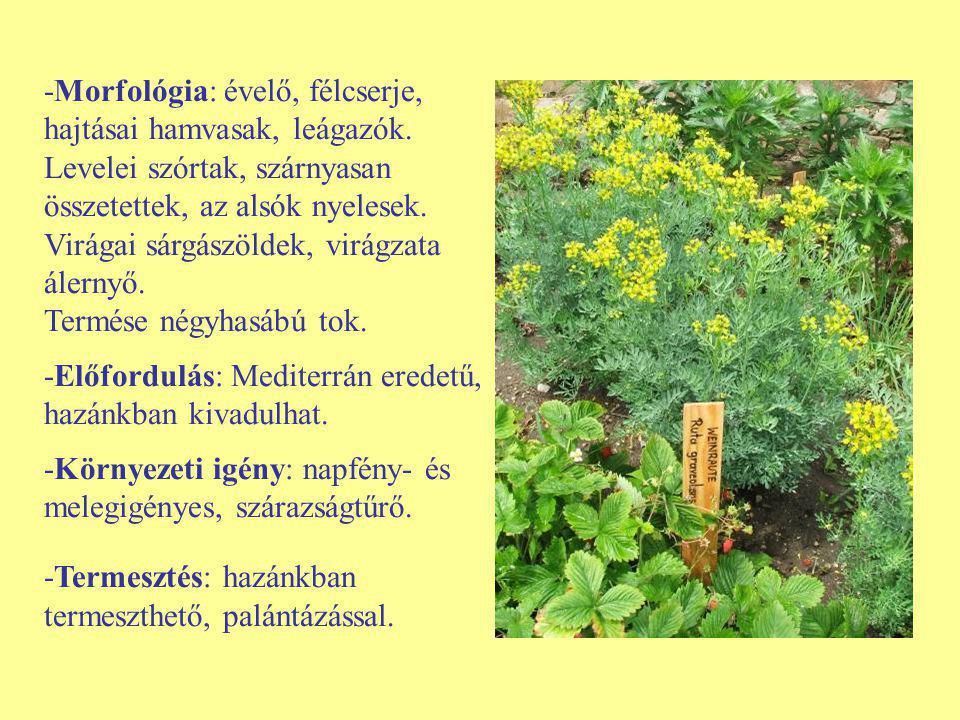-Morfológia: évelő, félcserje, hajtásai hamvasak, leágazók. Levelei szórtak, szárnyasan összetettek, az alsók nyelesek. Virágai sárgászöldek, virágzat