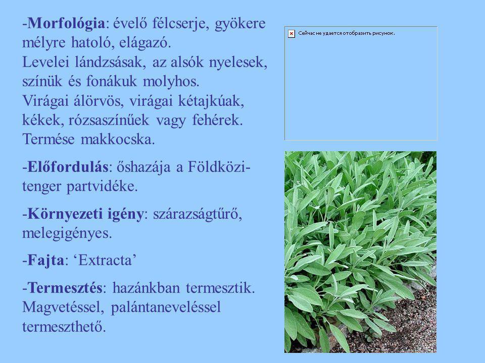 -Morfológia: évelő félcserje, gyökere mélyre hatoló, elágazó. Levelei lándzsásak, az alsók nyelesek, színük és fonákuk molyhos. Virágai álörvös, virág