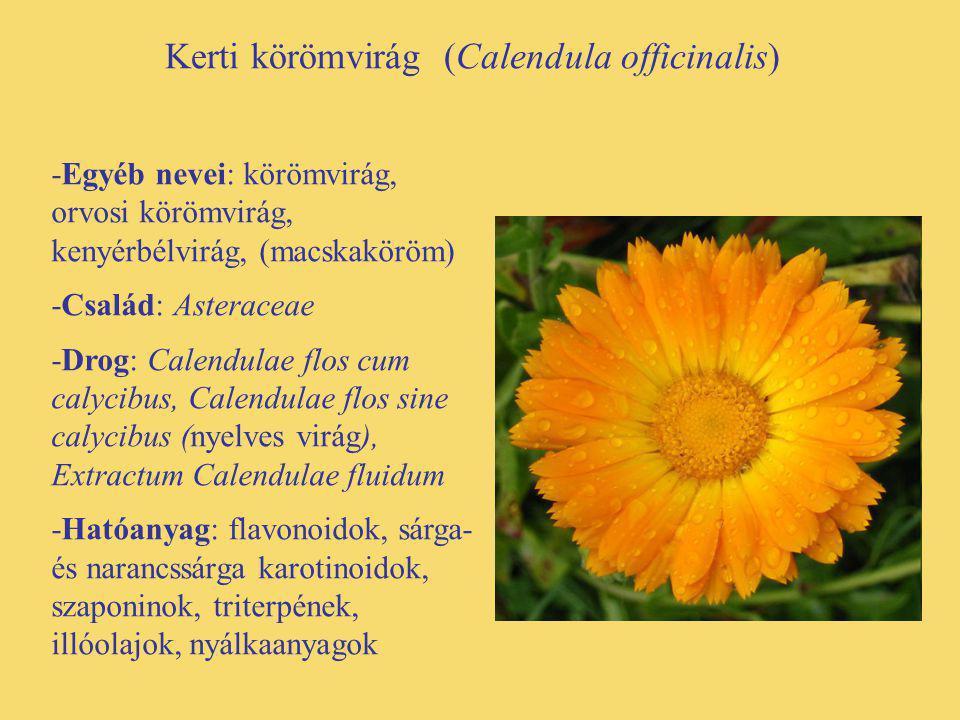 Kerti körömvirág (Calendula officinalis) -Egyéb nevei: körömvirág, orvosi körömvirág, kenyérbélvirág, (macskaköröm) -Család: Asteraceae -Drog: Calendu