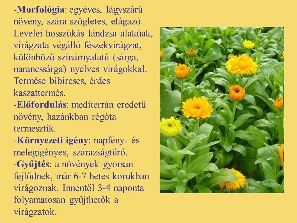 -Morfológia: egyéves, lágyszárú növény, szára szögletes, elágazó. Levelei hosszúkás lándzsa alakúak, virágzata végálló fészekvirágzat, különböző színá