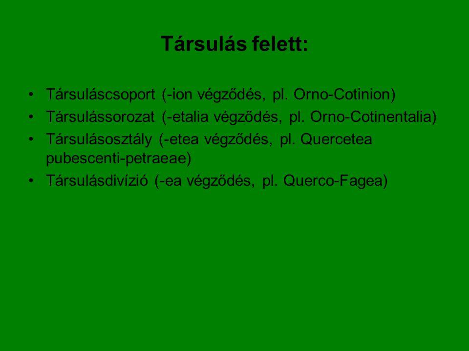 Társulás felett: Társuláscsoport (-ion végződés, pl. Orno-Cotinion) Társulássorozat (-etalia végződés, pl. Orno-Cotinentalia) Társulásosztály (-etea v