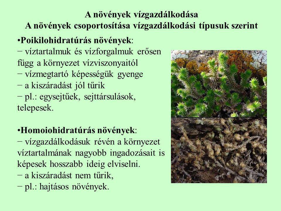 Poikilohidratúrás növények: − víztartalmuk és vízforgalmuk erősen függ a környezet vízviszonyaitól − vízmegtartó képességük gyenge − a kiszáradást jól