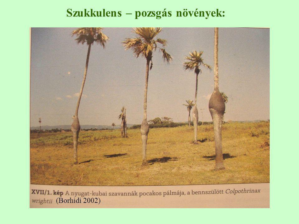 (Borhidi 2002) Szukkulens – pozsgás növények: