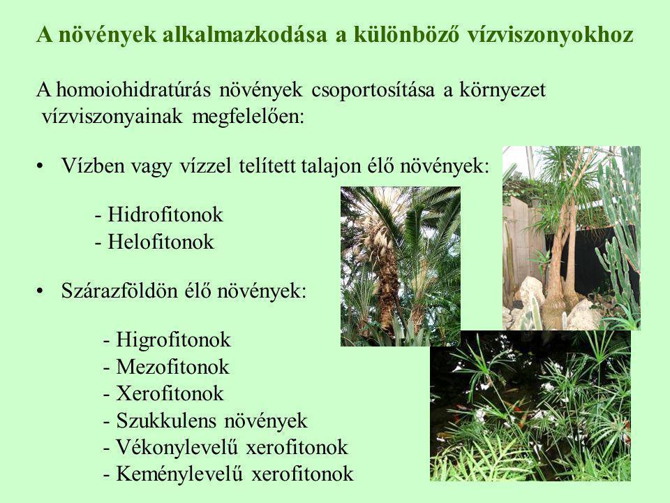 A növények alkalmazkodása a különböző vízviszonyokhoz A homoiohidratúrás növények csoportosítása a környezet vízviszonyainak megfelelően: Vízben vagy