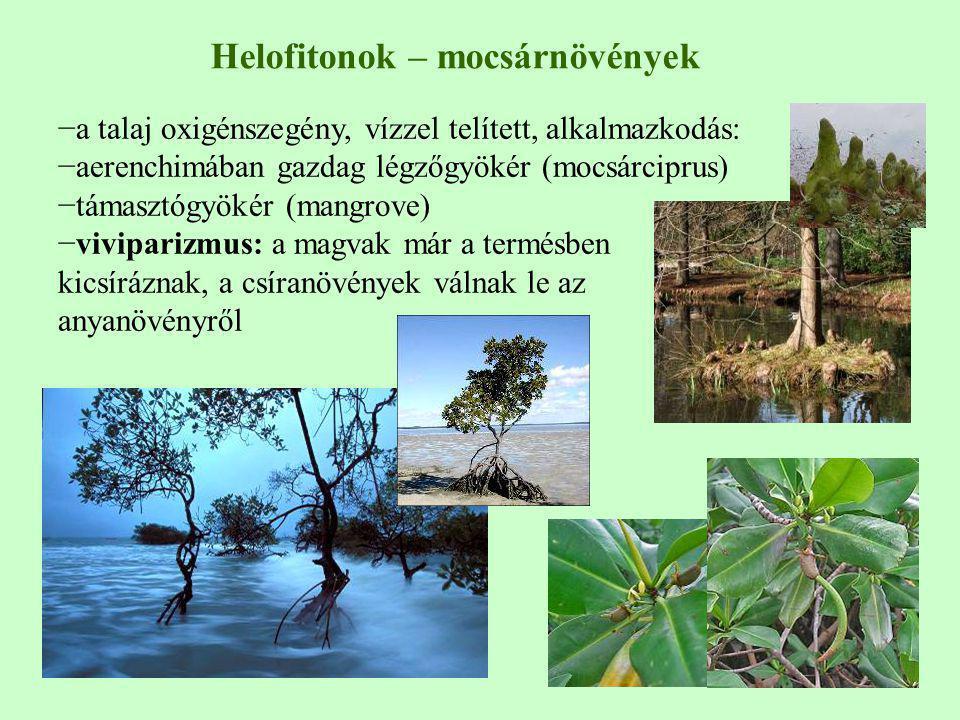 −a talaj oxigénszegény, vízzel telített, alkalmazkodás: −aerenchimában gazdag légzőgyökér (mocsárciprus) −támasztógyökér (mangrove) −viviparizmus: a m