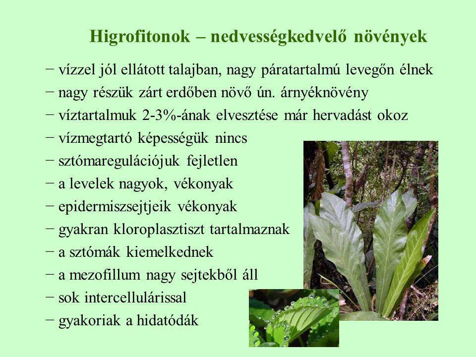 − vízzel jól ellátott talajban, nagy páratartalmú levegőn élnek − nagy részük zárt erdőben növő ún. árnyéknövény − víztartalmuk 2-3%-ának elvesztése m