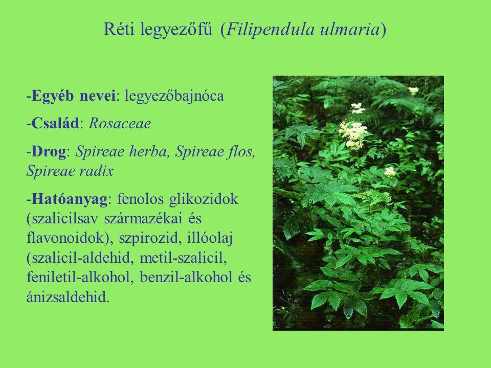 Réti legyezőfű (Filipendula ulmaria) -Egyéb nevei: legyezőbajnóca -Család: Rosaceae -Drog: Spireae herba, Spireae flos, Spireae radix -Hatóanyag: fenolos glikozidok (szalicilsav származékai és flavonoidok), szpirozid, illóolaj (szalicil-aldehid, metil-szalicil, feniletil-alkohol, benzil-alkohol és ánizsaldehid.