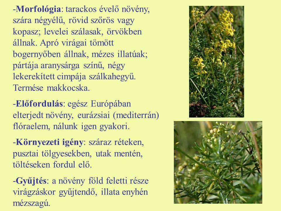 -Morfológia: tarackos évelő növény, szára négyélű, rövid szőrös vagy kopasz; levelei szálasak, örvökben állnak.