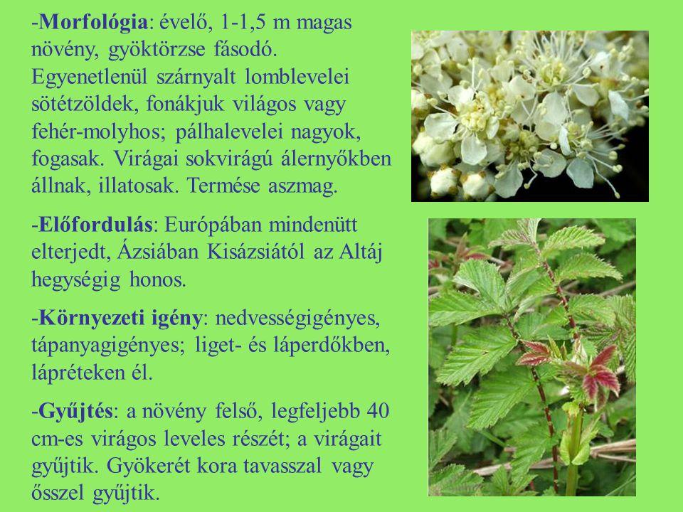 -Feldolgozás: a vékony rétegben szétterített növény szárítását árnyékos helyen kell végezni.