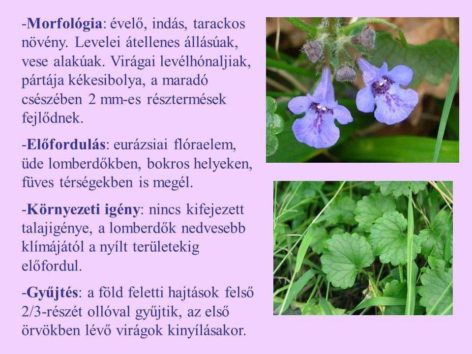 -Morfológia: évelő, indás, tarackos növény.Levelei átellenes állásúak, vese alakúak.
