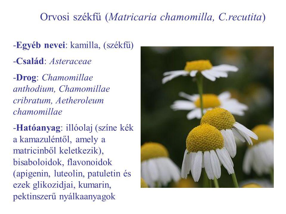 Orvosi székfű (Matricaria chamomilla, C.recutita) -Egyéb nevei: kamilla, (székfű) -Család: Asteraceae -Drog: Chamomillae anthodium, Chamomillae cribratum, Aetheroleum chamomillae -Hatóanyag: illóolaj (színe kék a kamazuléntől, amely a matricinből keletkezik), bisaboloidok, flavonoidok (apigenin, luteolin, patuletin és ezek glikozidjai, kumarin, pektinszerű nyálkaanyagok