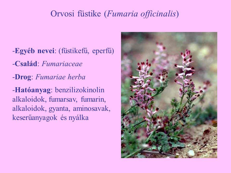Orvosi füstike (Fumaria officinalis) -Egyéb nevei: (füstikefű, eperfű) -Család: Fumariaceae -Drog: Fumariae herba -Hatóanyag: benzilizokinolin alkaloidok, fumarsav, fumarin, alkaloidok, gyanta, aminosavak, keserűanyagok és nyálka