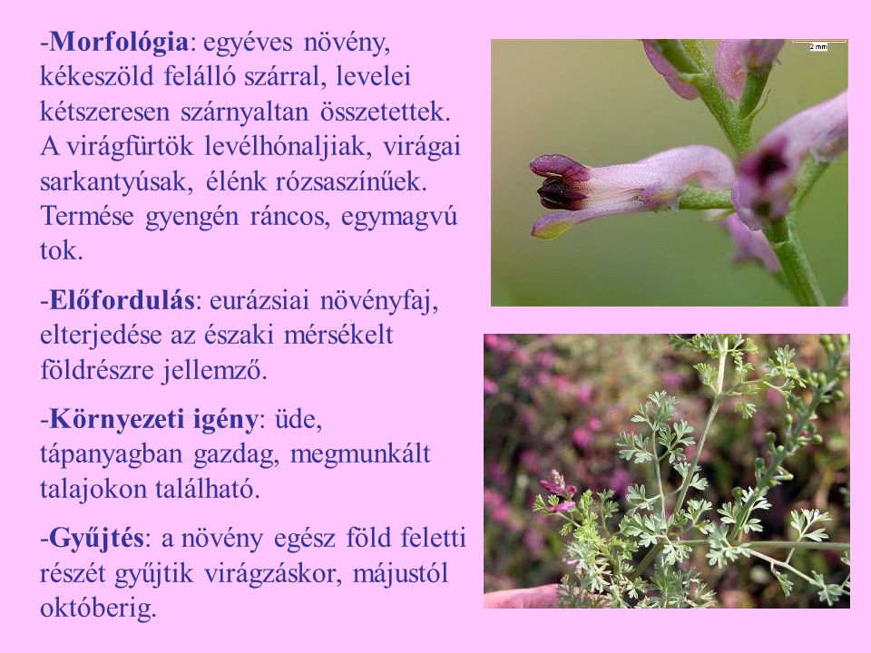 -Feldolgozás: a növényi részeket padláson vagy egyéb szellős, fedett helyen vékony rétegben kiterítve szárítsuk.