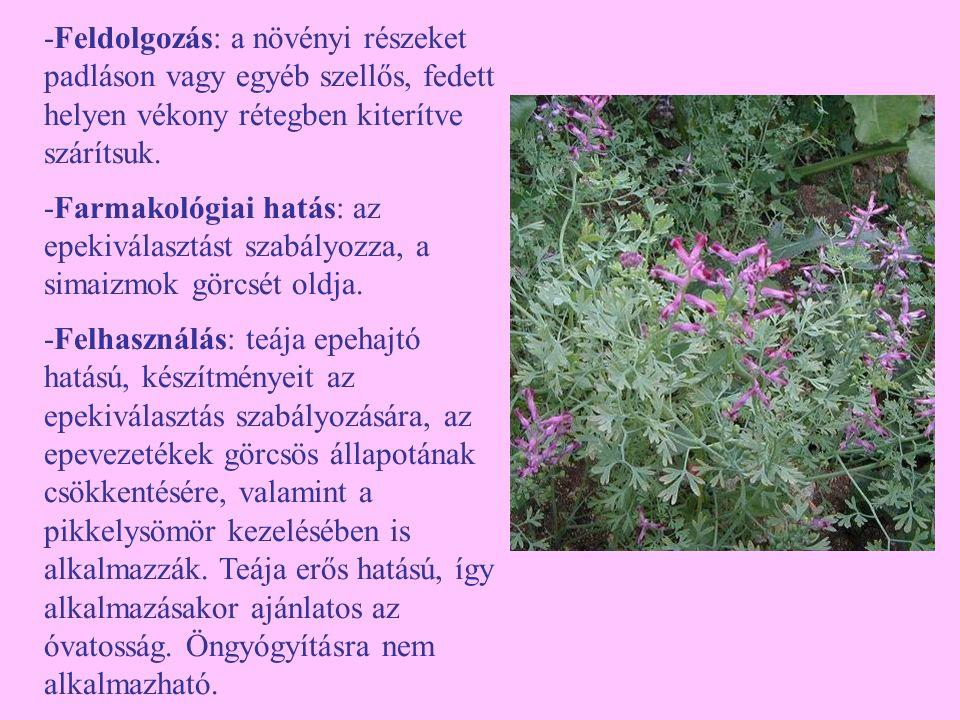 Közönséges szurokfű (Origanum vulgare) -Egyéb nevei: feketegyopár, vadmajoránna, vargamajoránna -Család: Lamiaceae -Drog: Origani vulgaris herba -Hatóanyag: illóolaj, karvakrol, timol, flavonoidok, cserzőanyagok, nyálkaanyagok