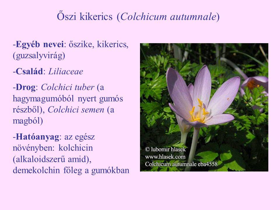 Őszi kikerics (Colchicum autumnale) -Egyéb nevei: őszike, kikerics, (guzsalyvirág) -Család: Liliaceae -Drog: Colchici tuber (a hagymagumóból nyert gum