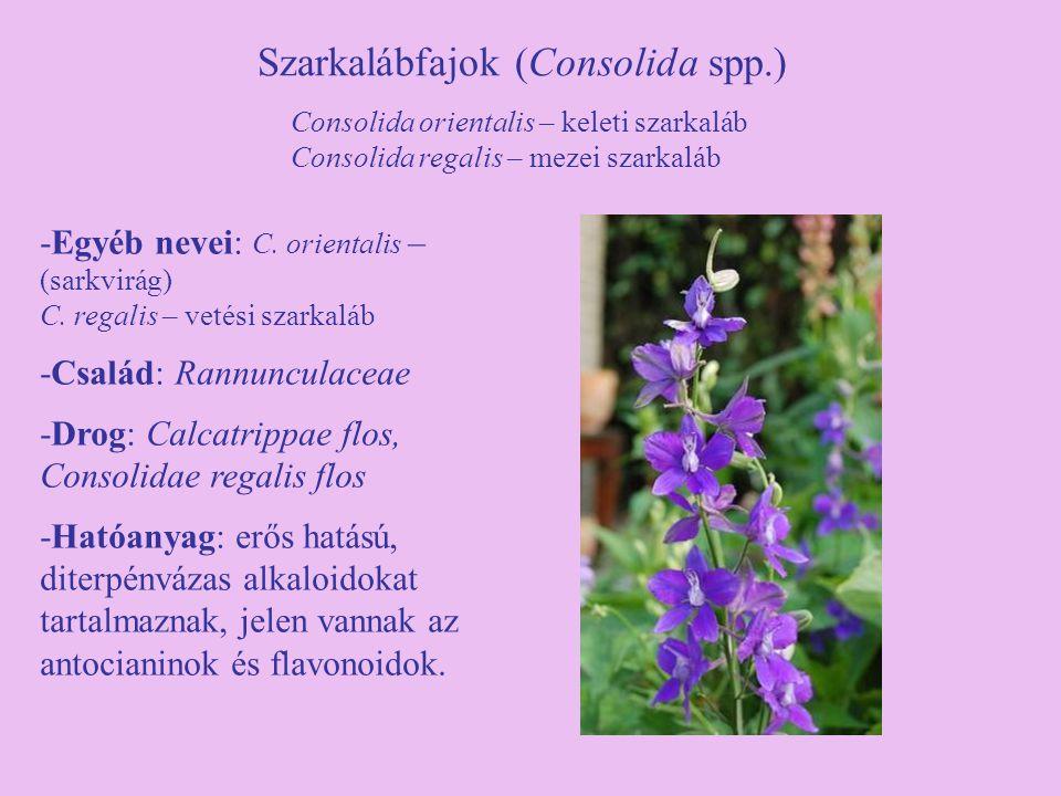 Szarkalábfajok (Consolida spp.) -Egyéb nevei: C. orientalis – (sarkvirág) C. regalis – vetési szarkaláb -Család: Rannunculaceae -Drog: Calcatrippae fl