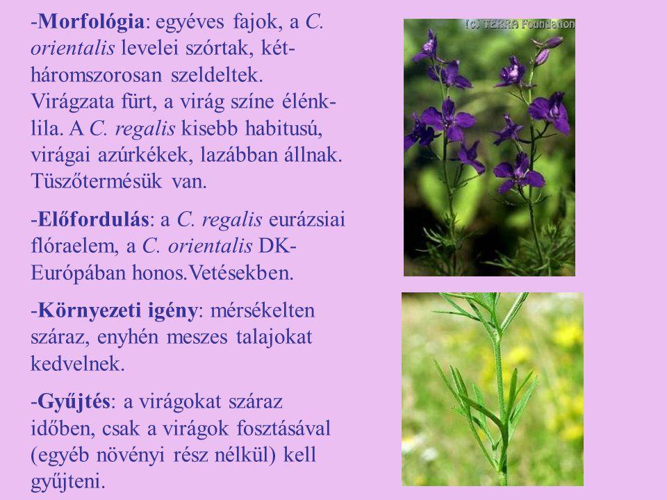 -Morfológia: egyéves fajok, a C. orientalis levelei szórtak, két- háromszorosan szeldeltek. Virágzata fürt, a virág színe élénk- lila. A C. regalis ki
